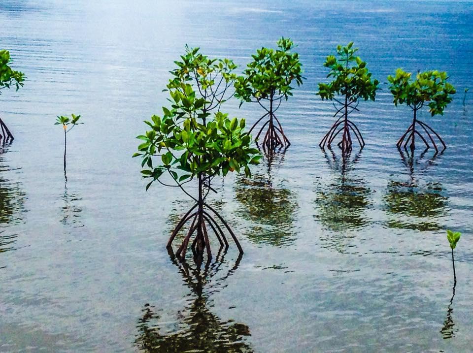 Triboa Bay Mangrove Park – Razel in the wonderland
